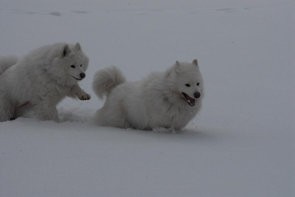 雪国ツアー♪ part3_a0049296_20283288.jpg