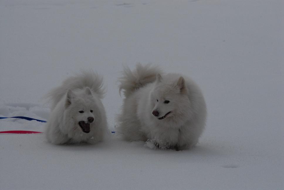 雪国ツアー♪ part3_a0049296_20291125.jpg