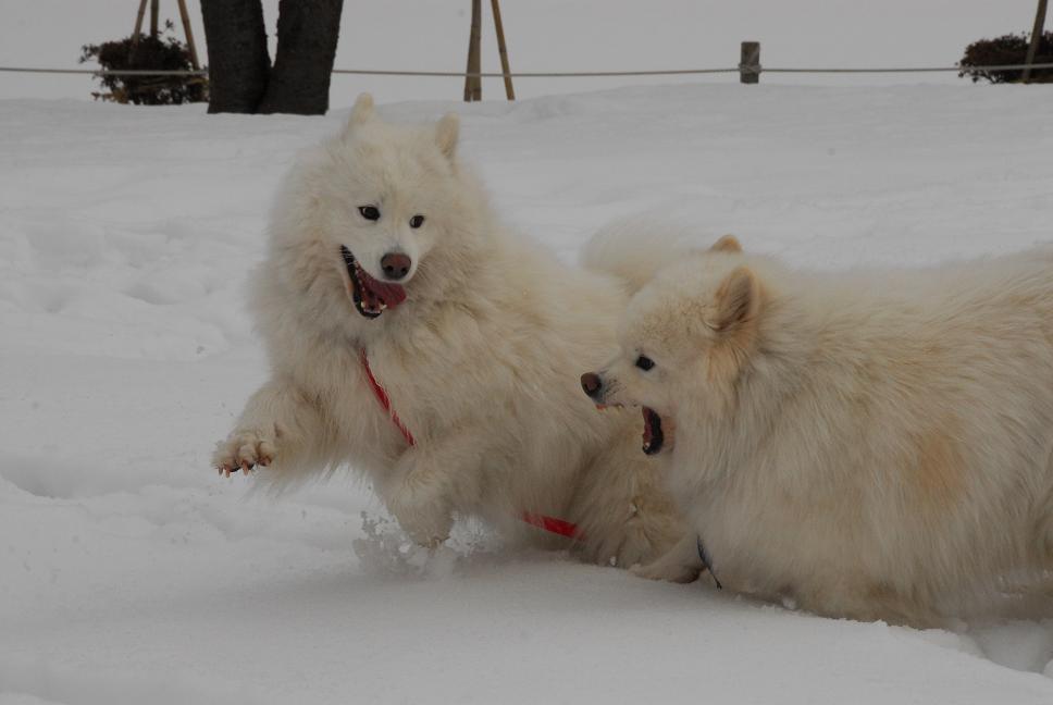 雪国ツアー♪ part3_a0049296_2030264.jpg