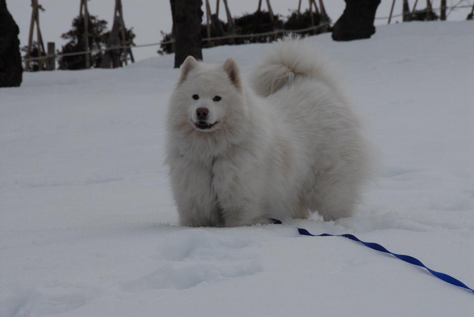 雪国ツアー♪ part3_a0049296_20305070.jpg