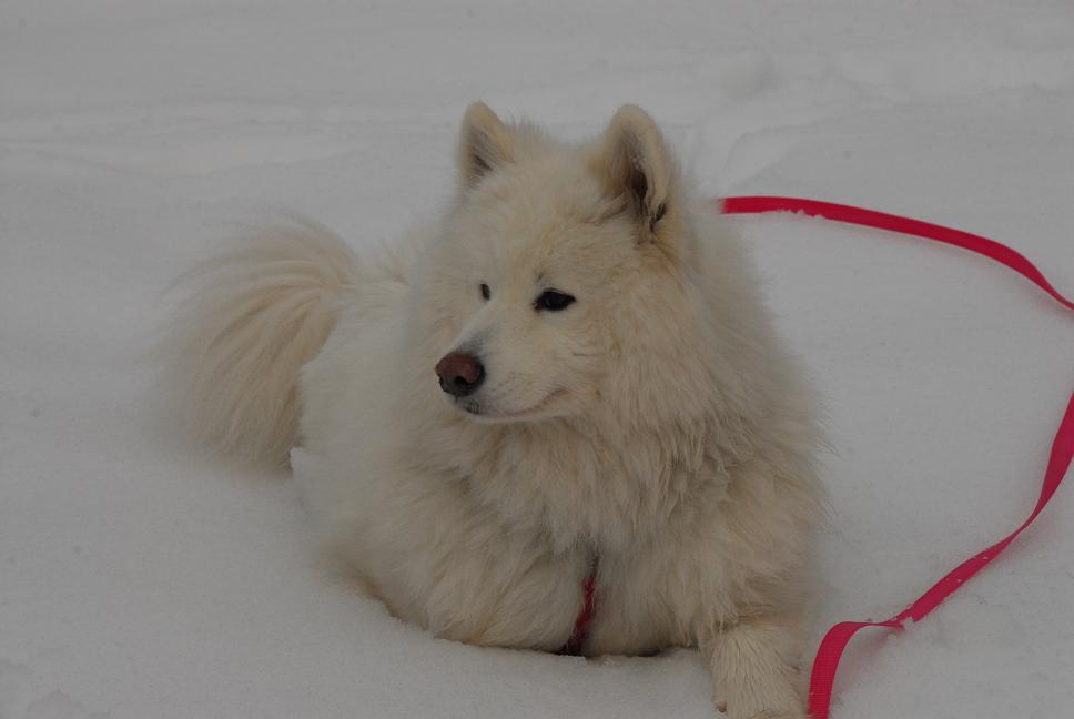雪国ツアー♪ part3_a0049296_20311126.jpg