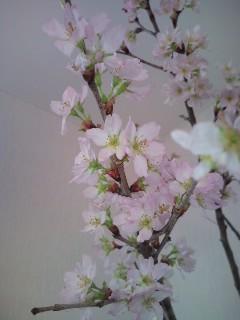♪梅は咲いたか・・・_b0172896_15458100.jpg