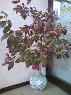 ♪梅は咲いたか・・・_b0172896_15512871.jpg