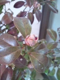 ♪梅は咲いたか・・・_b0172896_15522336.jpg