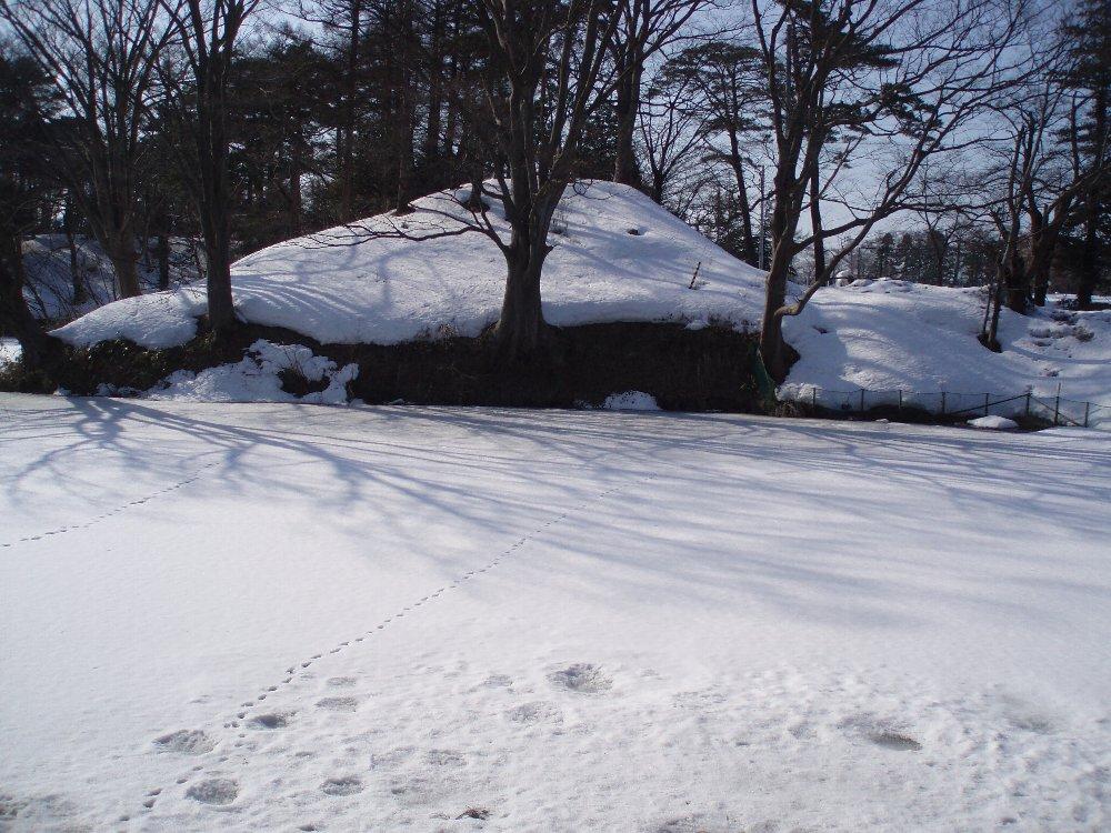 今年は大雪_e0087201_21531573.jpg