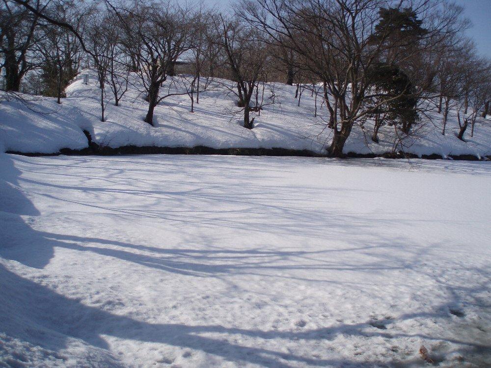 今年は大雪_e0087201_21533855.jpg