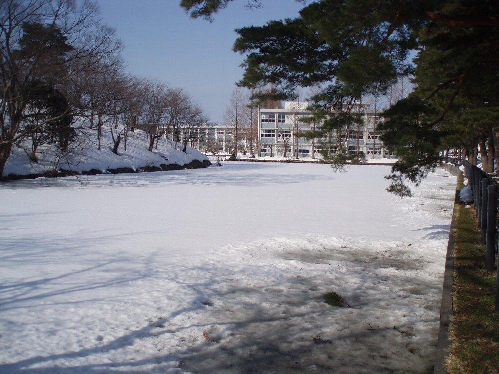 今年は大雪_e0087201_21534559.jpg