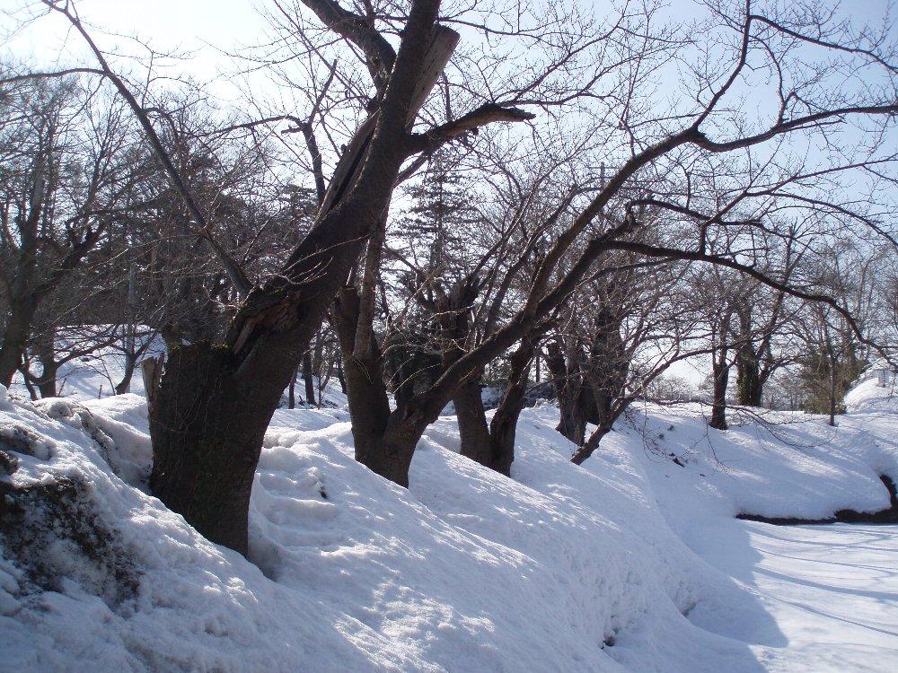 今年は大雪_e0087201_21535370.jpg