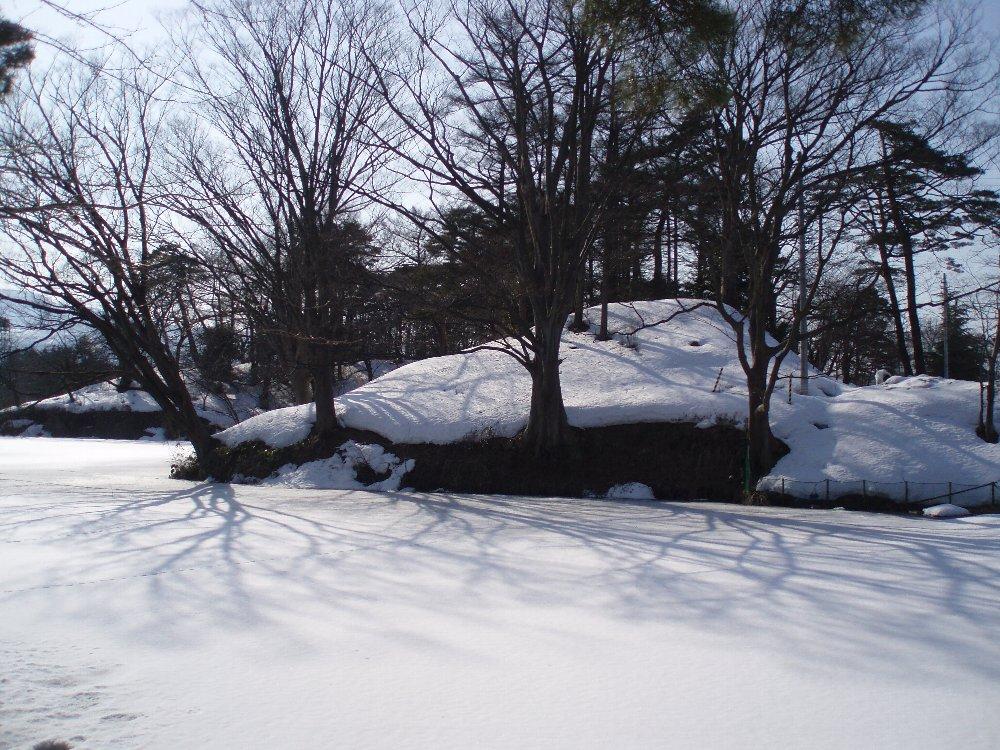 今年は大雪_e0087201_2154269.jpg