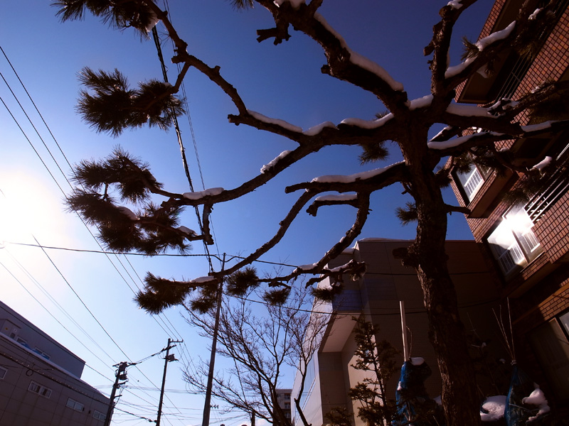 Blue Sky_f0166905_2353744.jpg