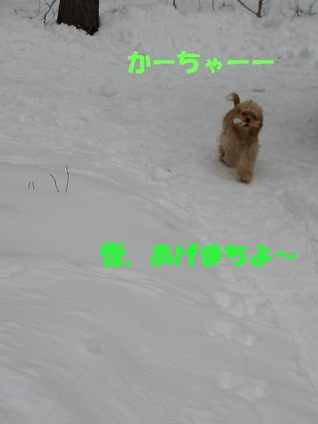 b0067012_1949938.jpg