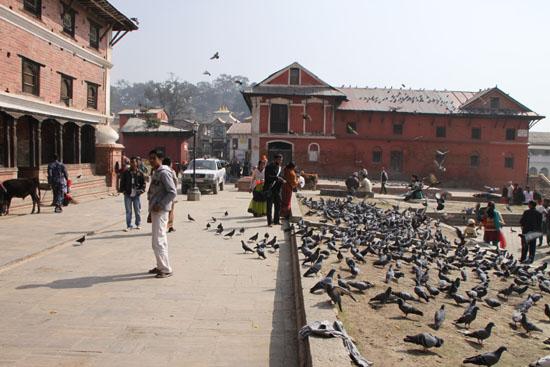 ネパールを歩く 17 パシュパティナート_e0048413_21235056.jpg
