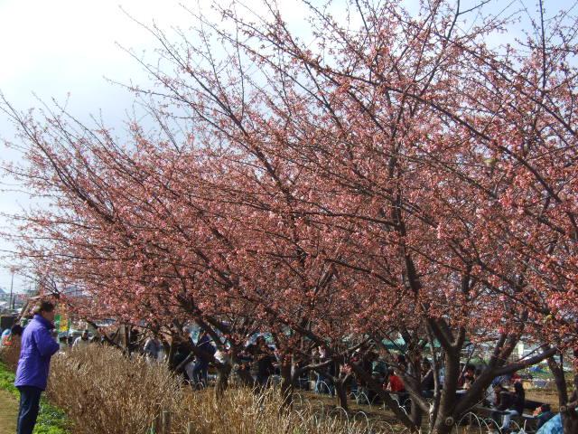 雪から桜に......冬から春に!_b0137932_21233588.jpg