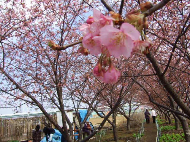 雪から桜に......冬から春に!_b0137932_2123447.jpg
