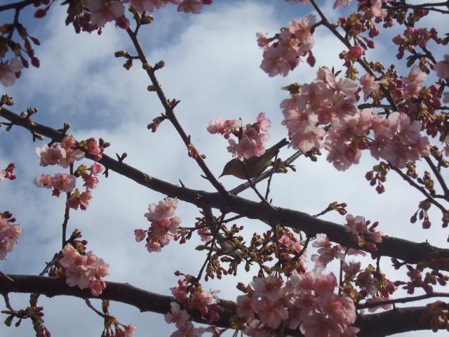 雪から桜に......冬から春に!_b0137932_21441086.jpg