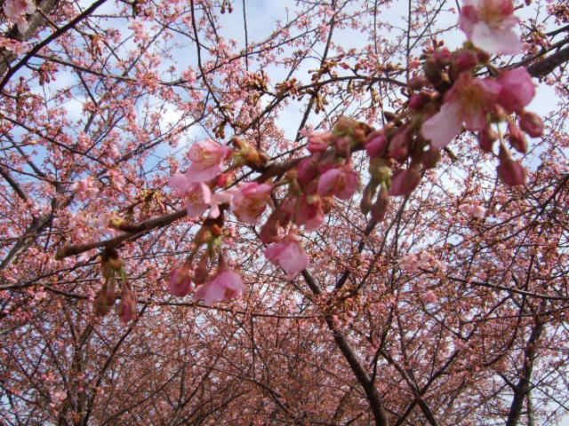 雪から桜に......冬から春に!_b0137932_21461652.jpg