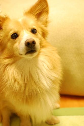 ご報告&犬が迷子になった時_c0099133_20142383.jpg