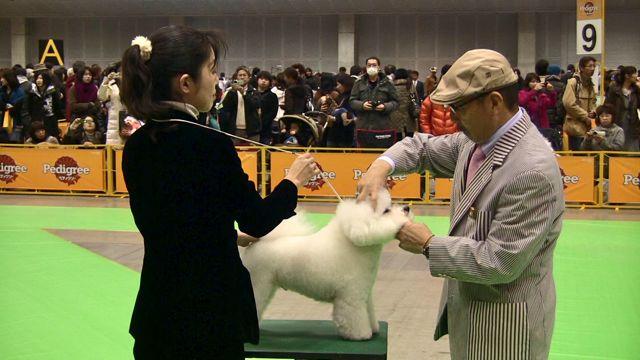 FCI Dog show at Pacifico Yokohama_f0209434_15204664.jpg