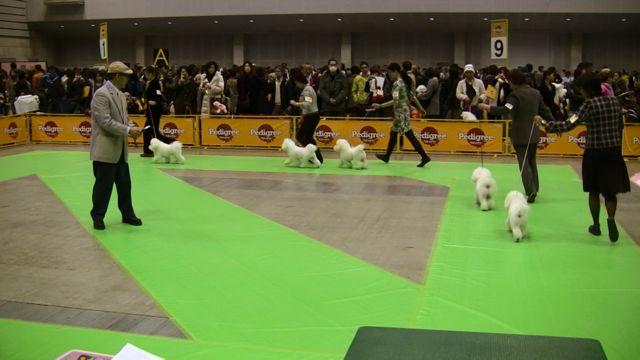 FCI Dog show at Pacifico Yokohama_f0209434_15245621.jpg