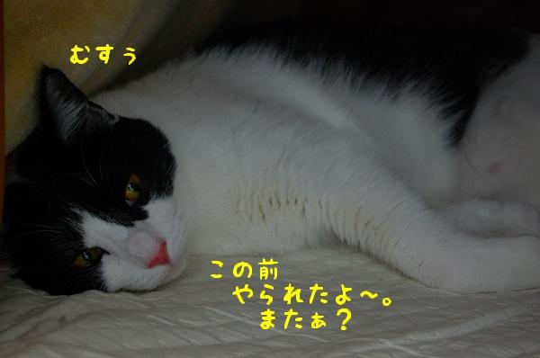 c0181639_154063.jpg