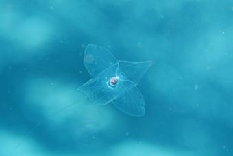 浮遊生物!!_b0186442_19373488.jpg