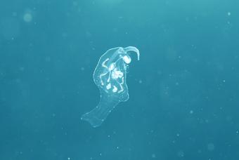 浮遊生物!!_b0186442_19382353.jpg