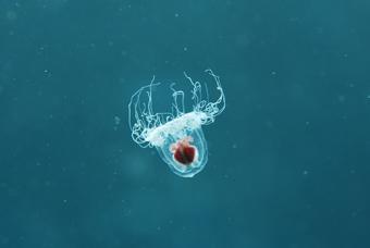 浮遊生物!!_b0186442_1938637.jpg