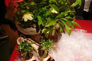 パーティ倶楽部 タリナ 結婚式_c0217044_2305762.jpg