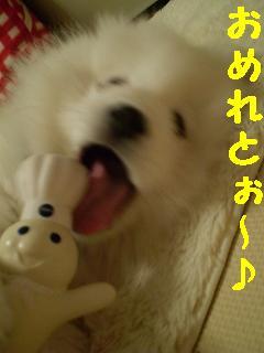 a0166954_014029.jpg