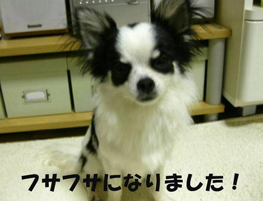 a0142274_21372011.jpg