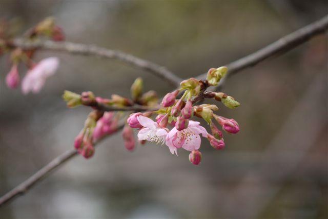 『思いのまま』と言う愛らしい名の梅の花♪♪♪_b0175688_2216123.jpg
