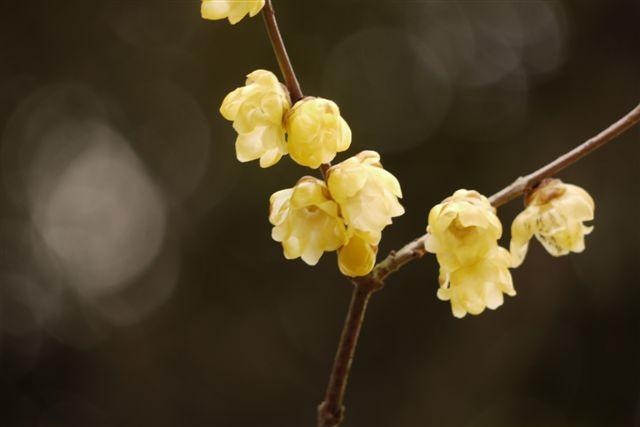『思いのまま』と言う愛らしい名の梅の花♪♪♪_b0175688_22172234.jpg