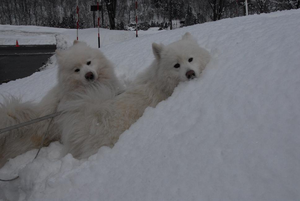雪国ツアー♪ part4_a0049296_2032198.jpg
