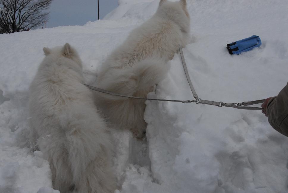 雪国ツアー♪ part4_a0049296_20322235.jpg
