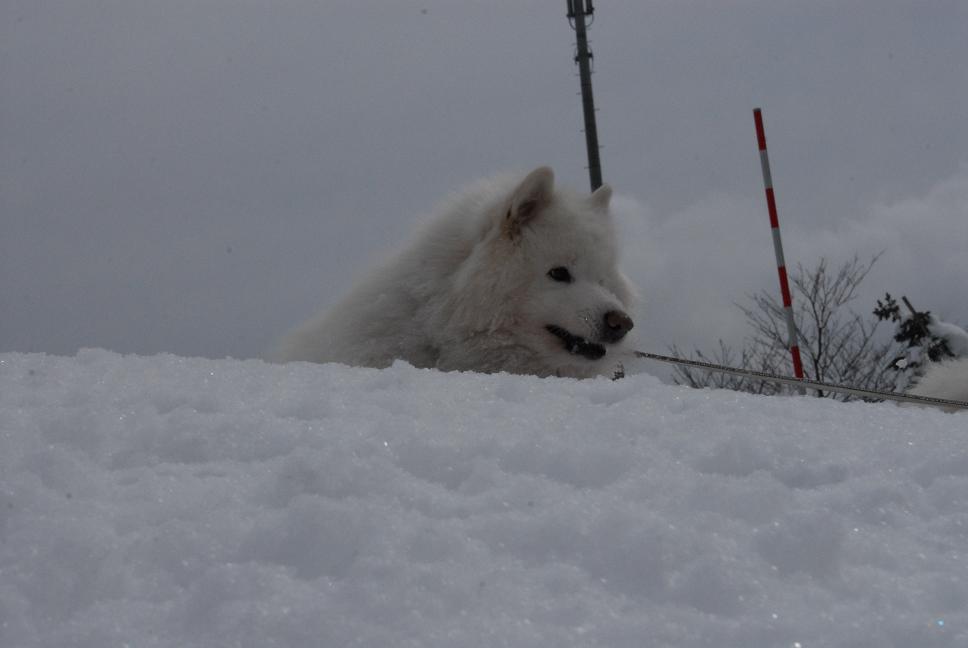 雪国ツアー♪ part4_a0049296_20333163.jpg