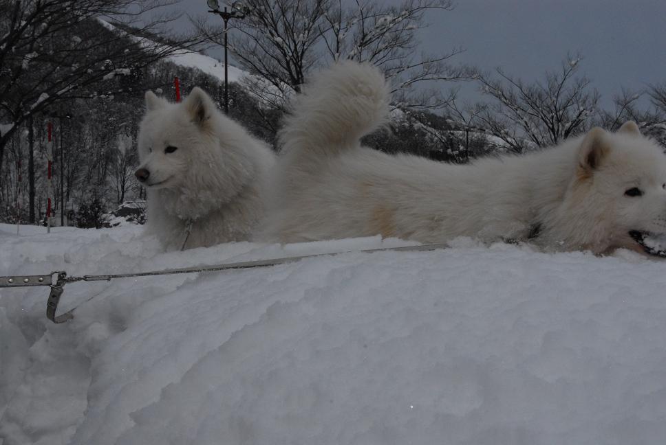 雪国ツアー♪ part4_a0049296_2033859.jpg