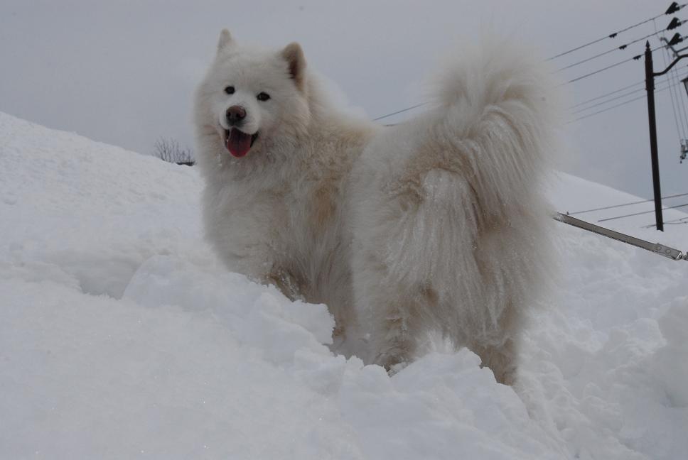 雪国ツアー♪ part4_a0049296_2034448.jpg