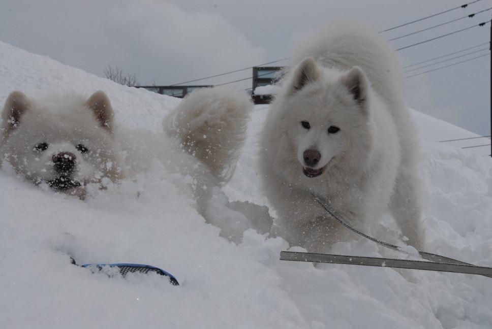 雪国ツアー♪ part4_a0049296_2035285.jpg