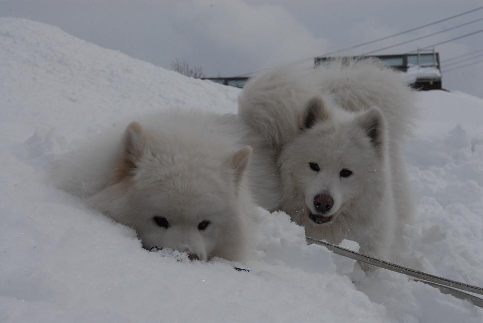 雪国ツアー♪ part4_a0049296_20362435.jpg