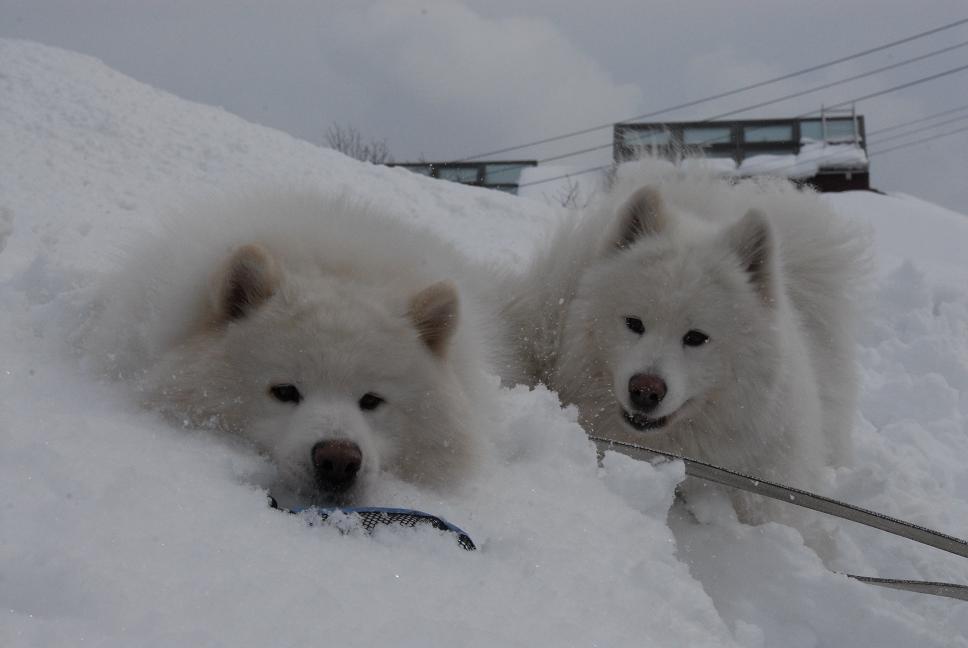 雪国ツアー♪ part4_a0049296_2036637.jpg