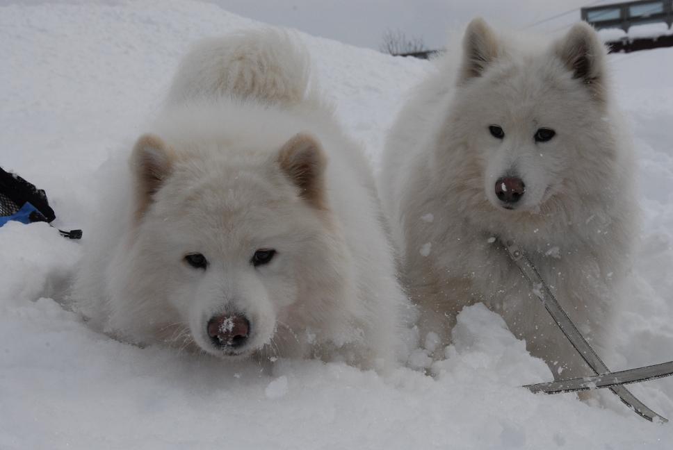 雪国ツアー♪ part4_a0049296_21594528.jpg