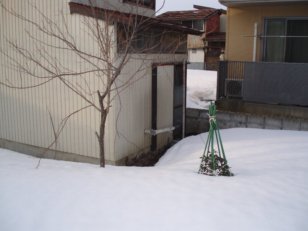 春の気配・春の準備_e0087201_2038288.jpg