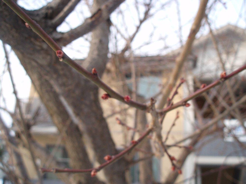 春の気配・春の準備_e0087201_20403326.jpg