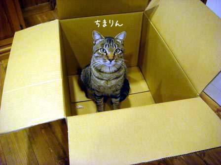 香箱猫_f0064906_1834338.jpg
