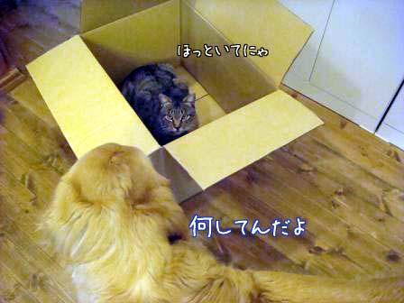 香箱猫_f0064906_1835332.jpg