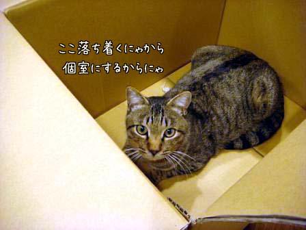 香箱猫_f0064906_1841792.jpg