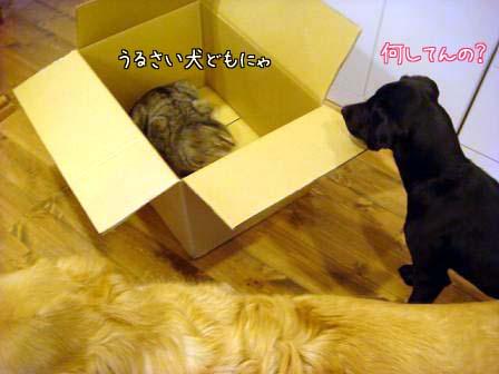 香箱猫_f0064906_184457.jpg