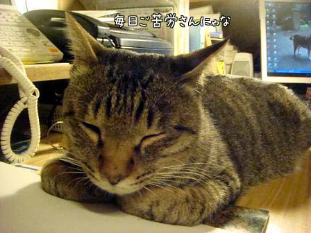 香箱猫_f0064906_1865944.jpg