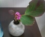 flower_f0206213_19302234.jpg