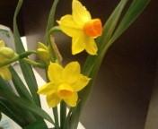 flower_f0206213_19305691.jpg